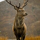 Monarch of the Glen by derekbeattie