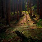 Just Follow the Light by Keld Bach