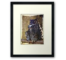 Who, who, who is looking at me? Framed Print