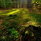 Forest Floor by Keld Bach