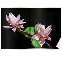 Cactus Flowers & Berry Leaves! Poster