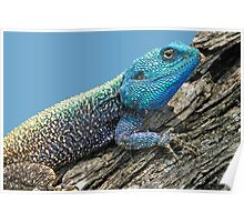 Tree Agama Poster