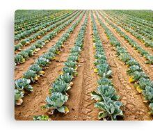 Vegetable Rows Canvas Print