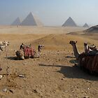 Camels & Pyramids by SHappe