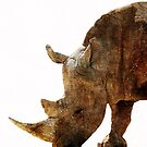 The Old Rhino by Robyn Carter