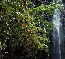 Hidden Falls by Vanessa Barklay