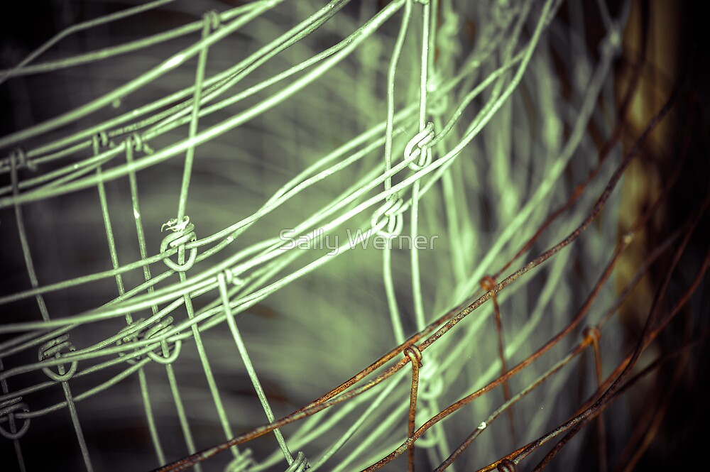 Fenced Canvas by Sally Werner