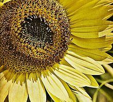 Sunflower iPad by KBritt