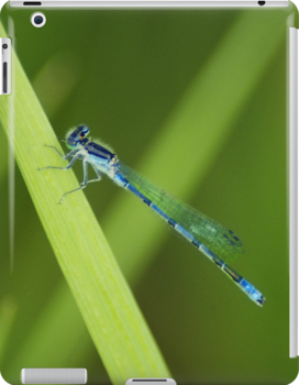 Blue Dragonfly iPad by KBritt