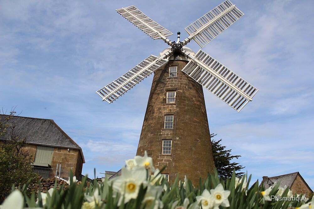 Daffodil Windmills by Prismatique