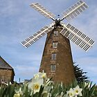 Daffodil Windmills by Prismatique