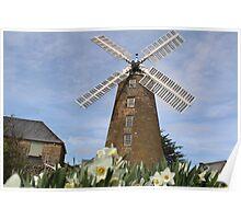 Daffodil Windmills Poster