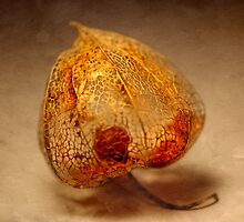 Physalis Part III. by Anne Seltmann