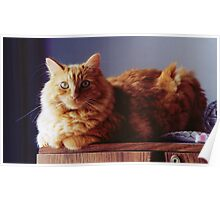 Bulls-Eye - Orange Tabby Poster