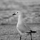 The Gulls - #5 by ExposureTherapy