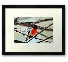 Red-capped Robin - Male Framed Print
