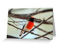 Red-capped Robin - Male Greeting Card