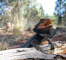 Eastern Bearded Dragon by EnviroKey