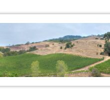 Vineyard Landscape Sticker