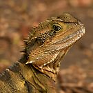 Currumbin Wildlife Sanctuary - Water Dragon  by Sea-Change