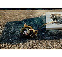 Dead Rose, Dead Soul Photographic Print