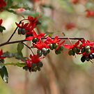 Berries and flowers by AHakir