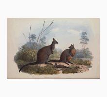 A monograph of the Macropodidæ or family of kangaroos John Gould 1842 018 Halmaturus Ualabatus Baby Tee