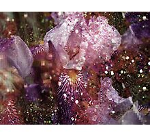 Abstract Iris. Photographic Print