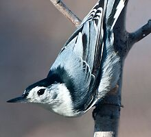 The Upside Down Bird by barnsis