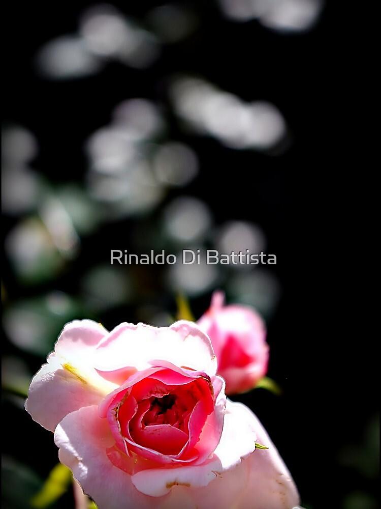 The Rose in Pink by Rinaldo Di Battista