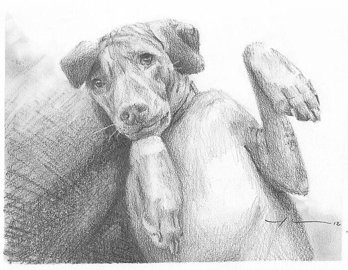 Vizsla puppy drawing by Mike Theuer