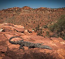 Perentie - Kings Canyon, NT by Liam Byrne