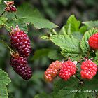 Loganberries by Darkness666