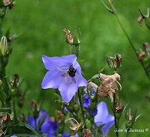 Harebells with Bee by Darkness666