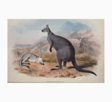 A monograph of the Macropodidæ or family of kangaroos John Gould 1842 005 Petrogale Robustus One Piece - Short Sleeve