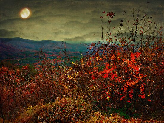 Moonlit hillside by Scott Mitchell