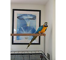 One must match decor and pets Photographic Print