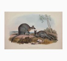A monograph of the Macropodidæ or family of kangaroos John Gould 1842 007 Halmaturus Bennettii One Piece - Short Sleeve