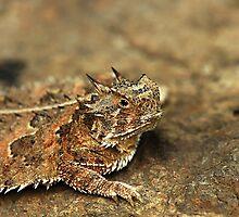 Horned Lizard II by Samantha Dean