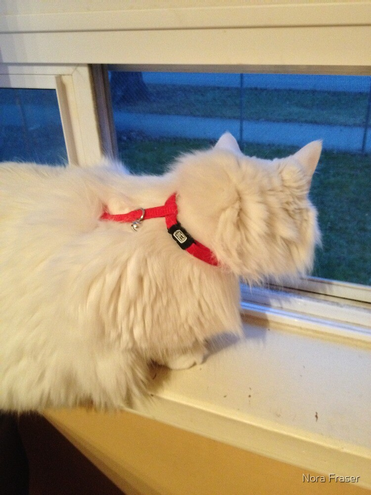 Sugar wants to go Outside by Nora Fraser