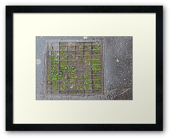 City squares by Paul Pasco