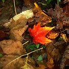 Fall Flames Out  by RC deWinter