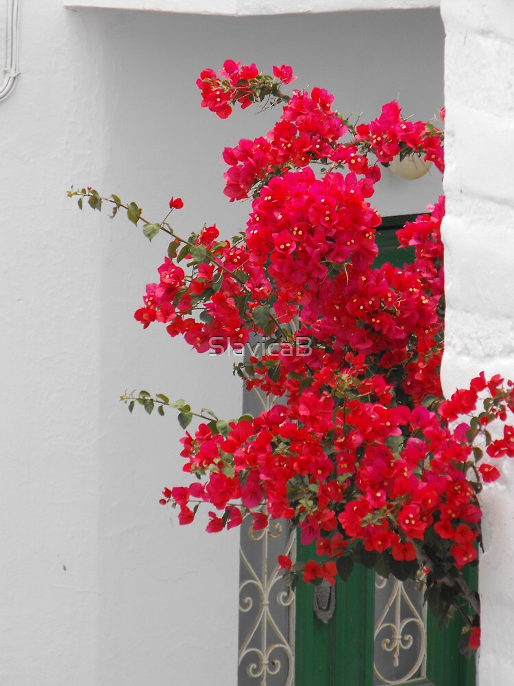 Greek Island green window and flower by SlavicaB