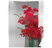 Greek Island green window and flower Poster