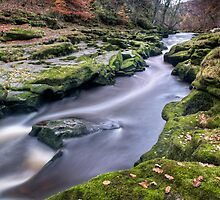 Autumnal Strid by Chris Frost Photography