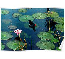 Resting on a lily pad Poster