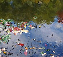 Fall leaves in water by rbs247