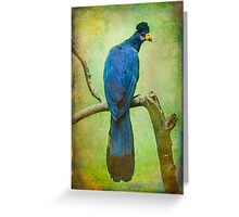 Finer Feather Friends- The Grand Tufted HuttonBird Greeting Card