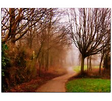 Bare Trees.............. Photographic Print