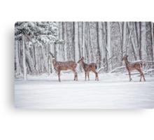 Winter Visit Canvas Print